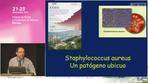 Staphylococcus aureus un patógeno ubicuo